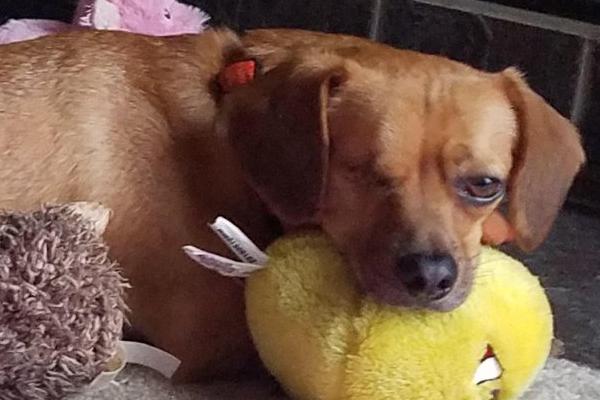 Chuckie  Began sponsoring: Feb 2019 - Veterinary Specialist - Veterinary Care