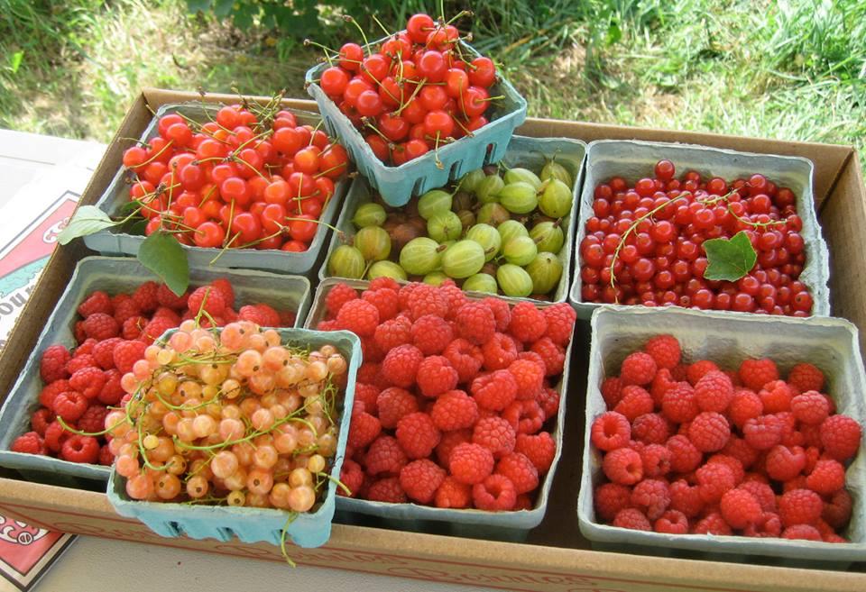 gorgeousberryvariety.jpg