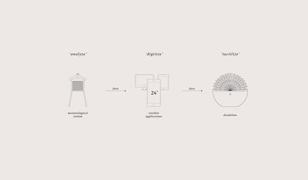 dandelion-illust-diagram.jpg