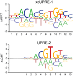 Basic leucine zipper transcription factor Hac1 binds DNA in two distinct modes as revealed by microfluidic analyses.   Fordyce, P.M.,  Pincus, D., Kimmig, P., Nelson, C.S., El-Samad, H., Walter, P., & DeRisi, J.L.  PNAS  (2012).  ( pdf ) ( web )