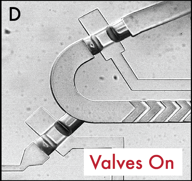 Multi-step variable height photolithography for valved multilayer microfluidic devices.  Brower, K.*, White, A.K.*, &  Fordyce, P.M.   Journal of Visualized Experiments  ( in press ). (* denotes equal authorship).