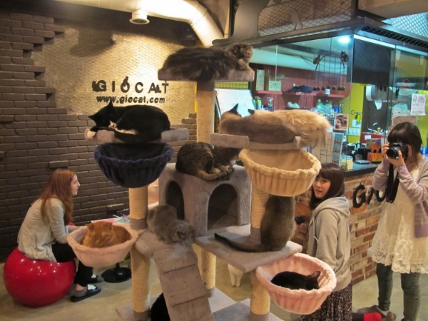 a Korean Cat Café