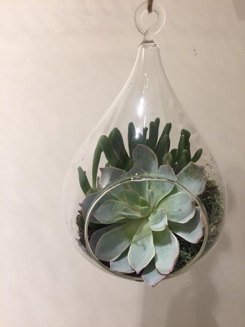 Succulent Terrarium The Flower Shop