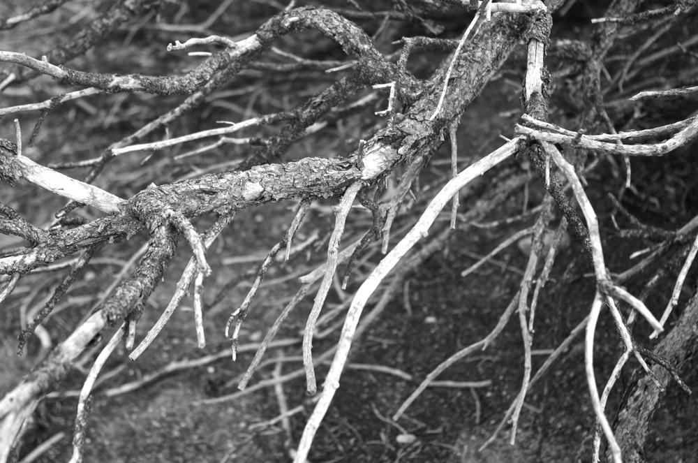 Dry tree.jpg