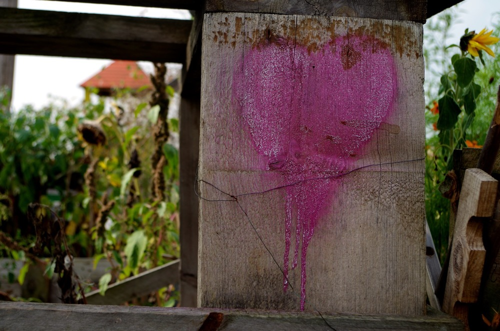 A Bleeding Heart discovered