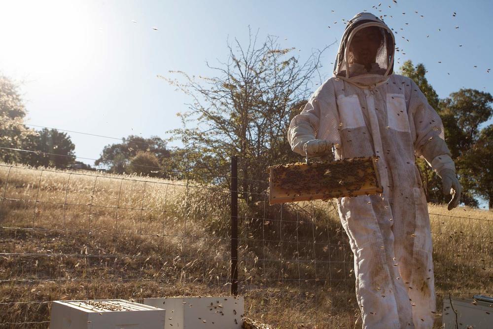 Bees_03_web.jpg