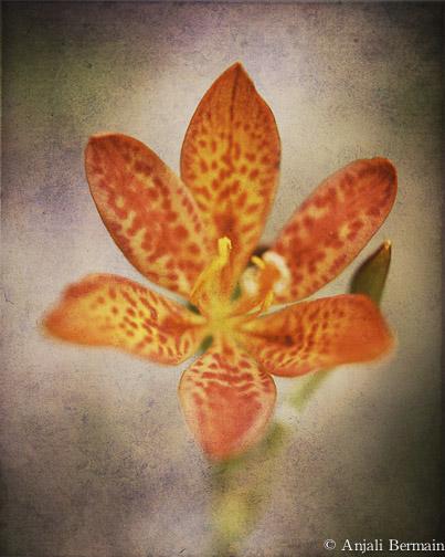 flower_for_print.jpg
