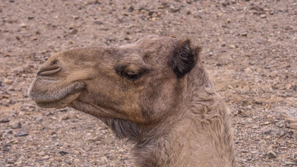 egypt photos-1170397.jpg