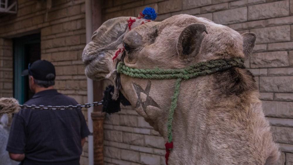 egypt photos-1160997.jpg