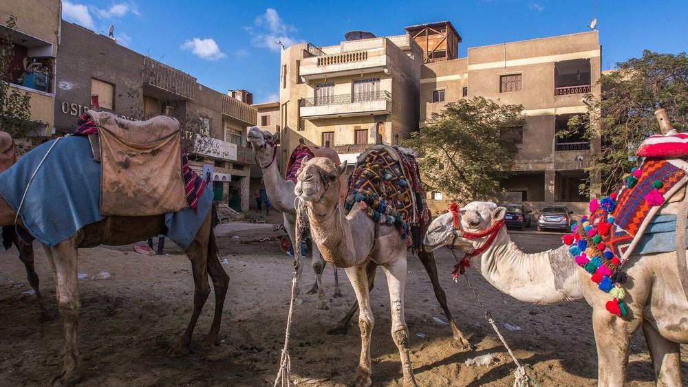 egypt photos-1160930.jpg