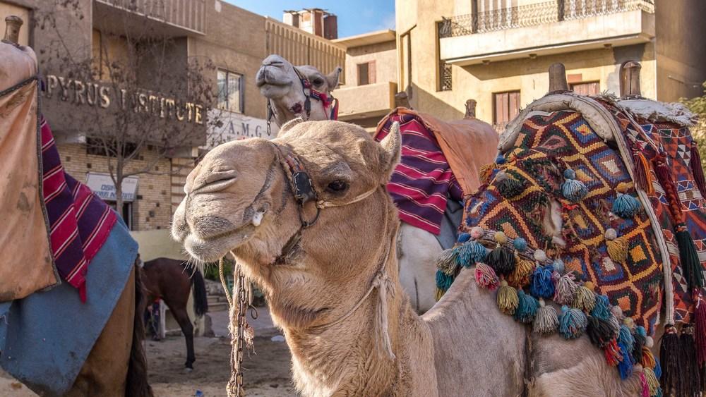 egypt photos-1160936.jpg