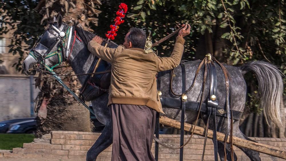 egypt photos-1160790.jpg