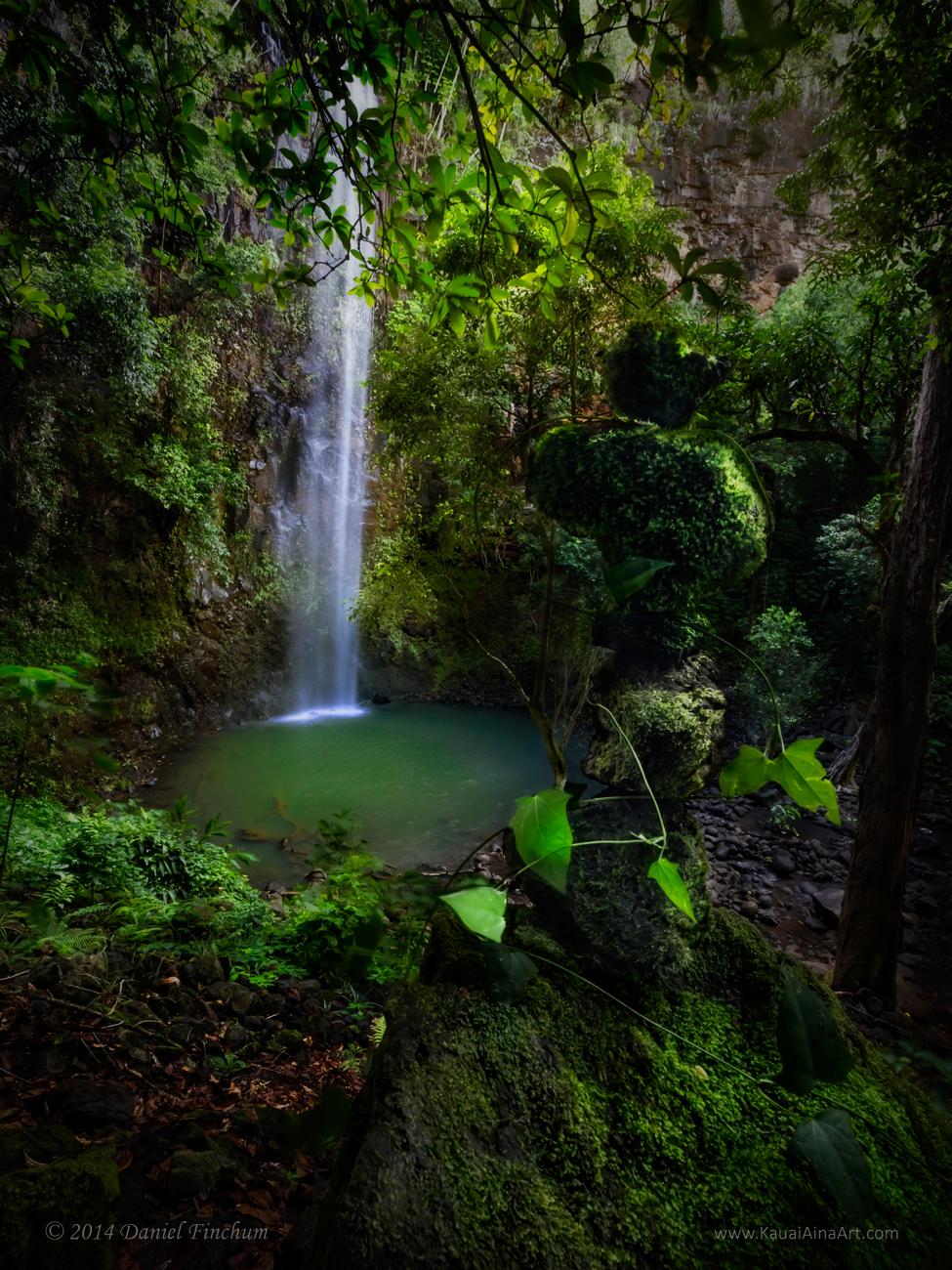 Ka Limu Kupaianaha (Secret Moss)