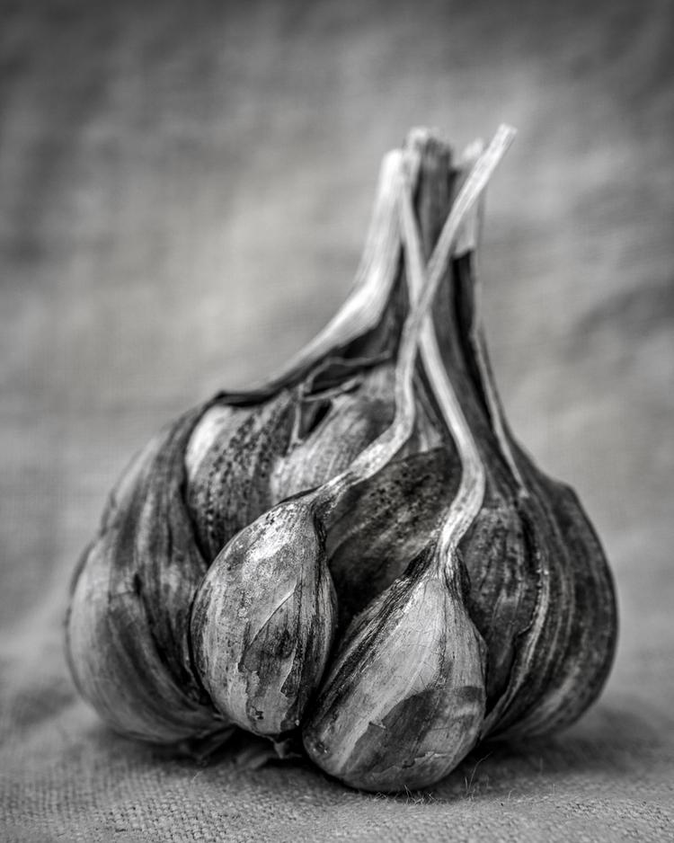 Garlic gascony