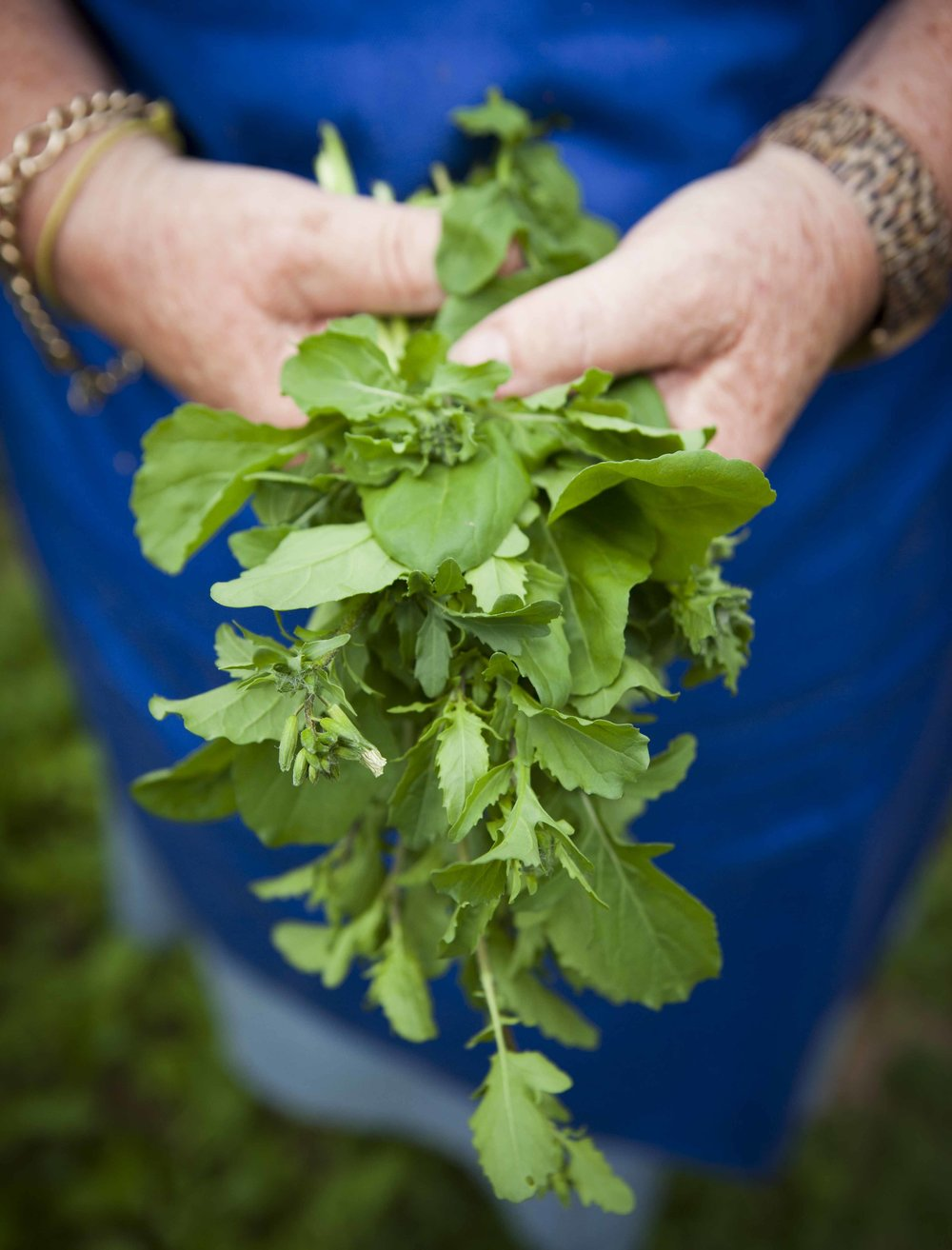 Capturing herbs during a food and travel photography workshop