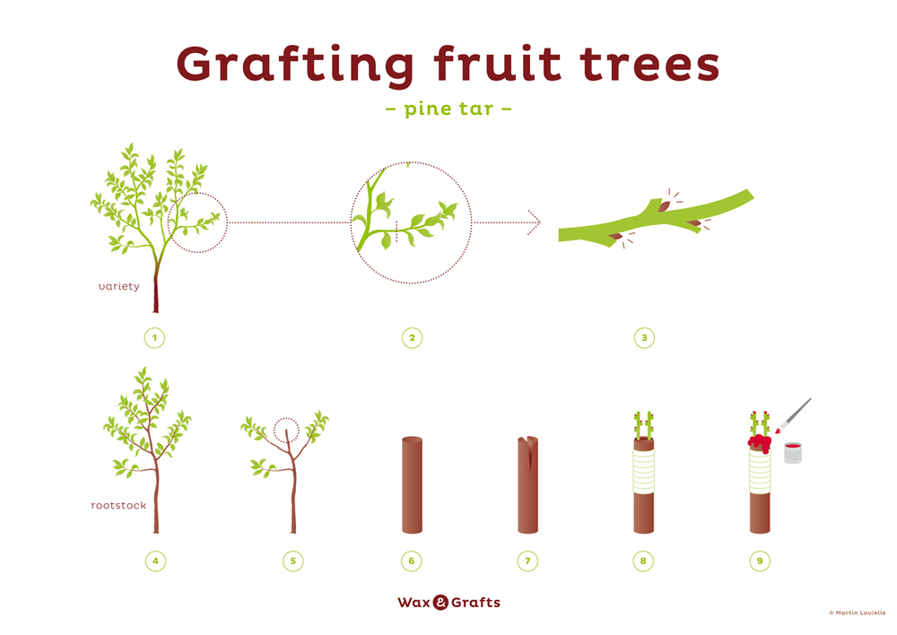 wax-and-grafts-pine-tar-for-fruit-tree-grafting.jpg