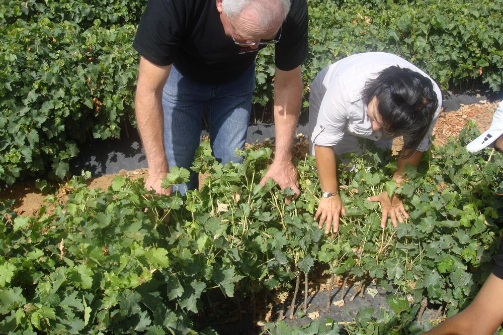 Consultancy-checking-plants-in-nursery-field.JPG
