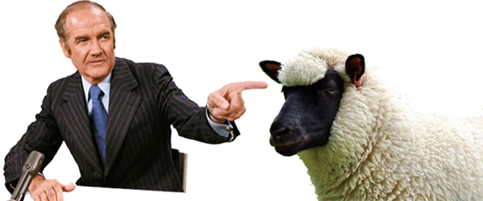 sheep mcgov