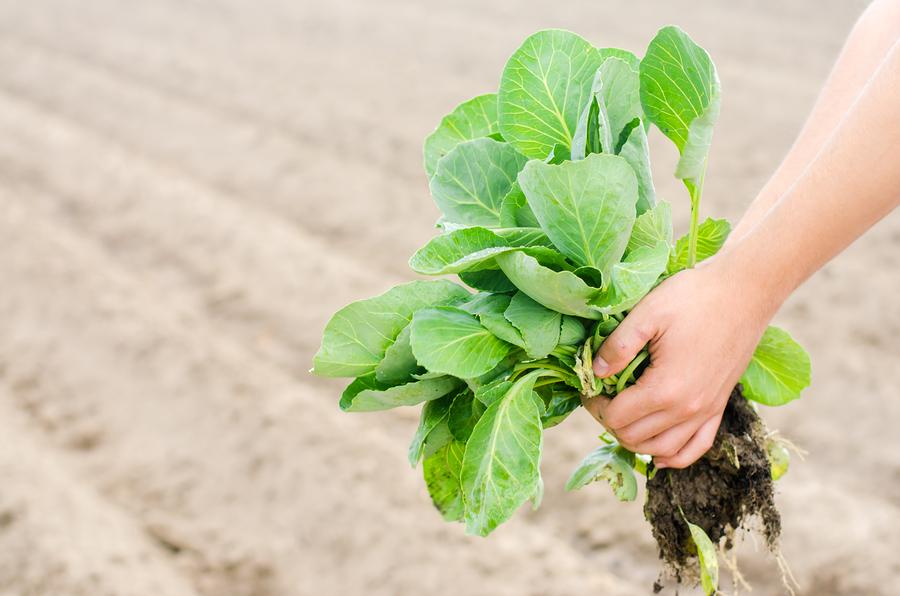 Proyectos académicos agroindustriales para reducir la pobreza.jpg