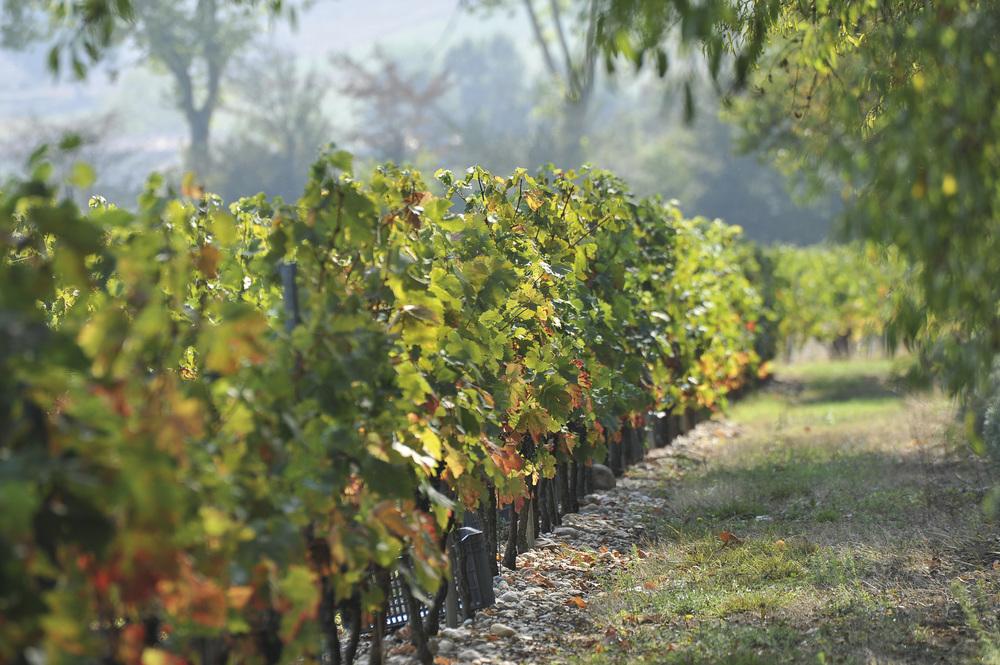 allée vignes.jpg