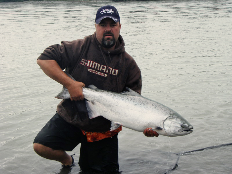 Gorgeous Fraser River Chinook/King Salmon.