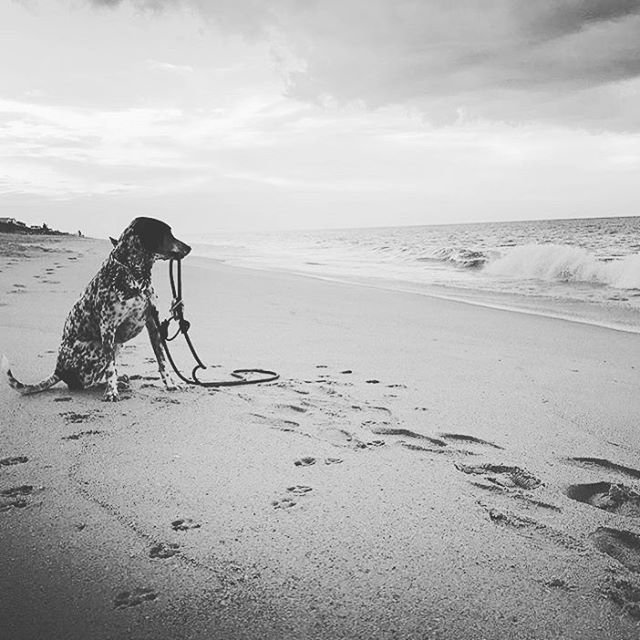 @tails_from_orbit will be starring in the new epic release and retelling of a love story, The Leash and I. It will capture your heart with many paws 🐾 in the sand and long walks on the beach 🏝. Thanks Orbit and family for always using the Ruff-Guider on your adventures! #beachdog #dogamor #paws🐾 #ilovemydogleash #dogwalks #dogsofinstagram #sandinmypaws