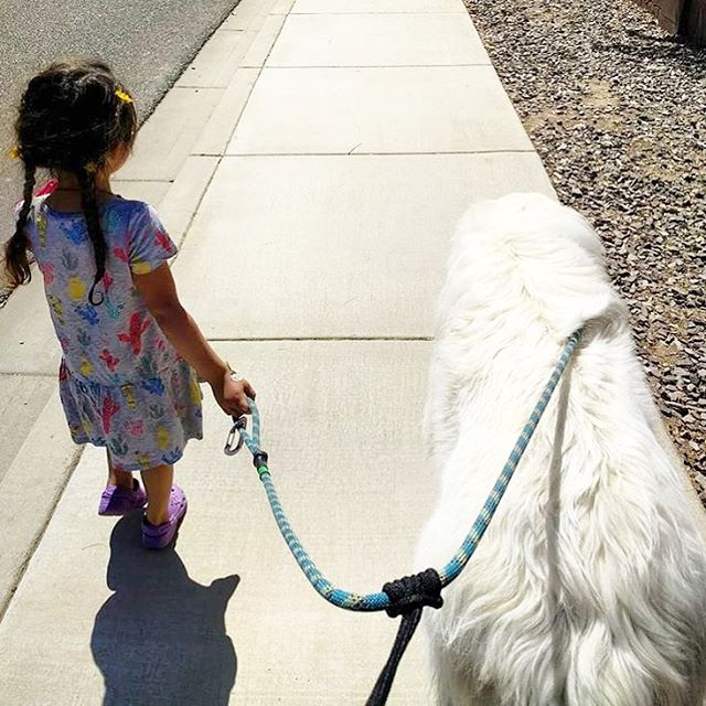 The future is bright for any young girl that can walk with giants. @griffinthegreat_pyrenees and his little companion set off for neighborhood adventures using the Ruff-Guider Leash. The signature sliding handle seen here being used in action to keep a close reign on the fun. Thanks for posting! #greatpyrenees #dogsandkids #sidewalkadventures #climbingrope #doggear #sunnysideoflife