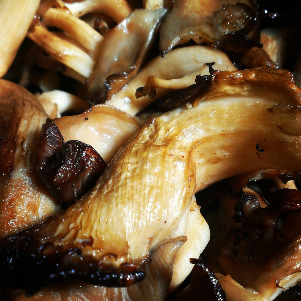 Smoked Local Oyster Mushroom.jpg
