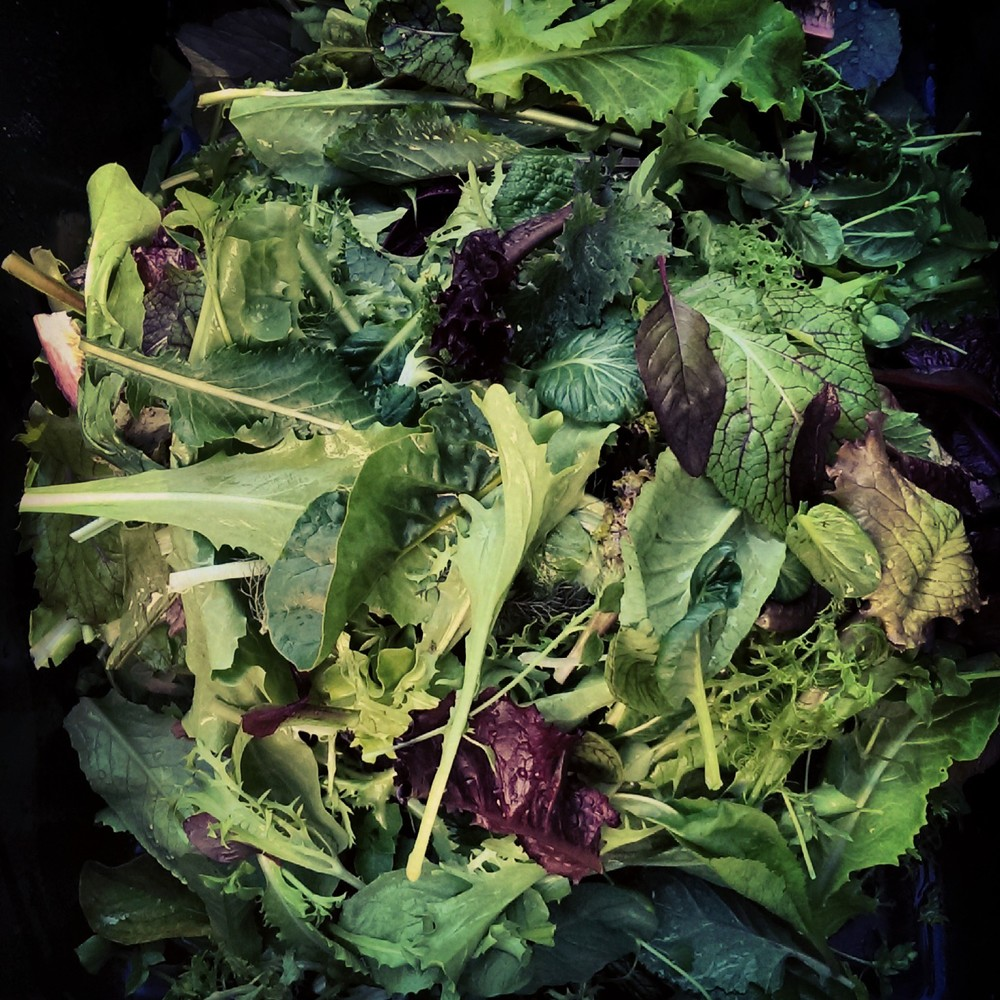 Bitter Harvest Greens