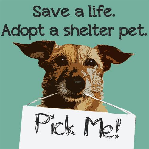 save_a_life_adopt_a_shelter_pet.jpg