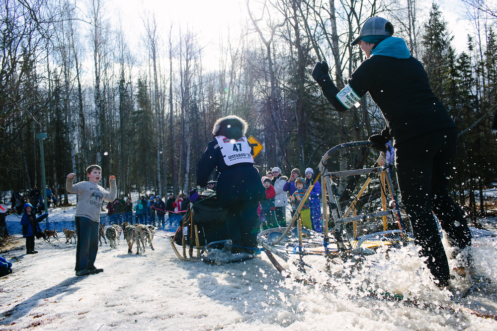 Becca Moore of Willow and her dog handler passed crowds of young people in Anchorage Alaska during the Iditarod's Ceremonial Start. March 7, 2015. Teams faced warm temperatures and lack of snow on the 11 mile ceremonial start route.
