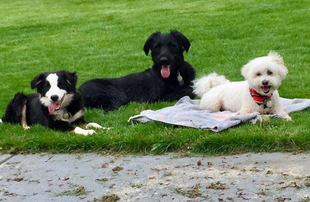 Left to right: ben nevis, johnny, remi