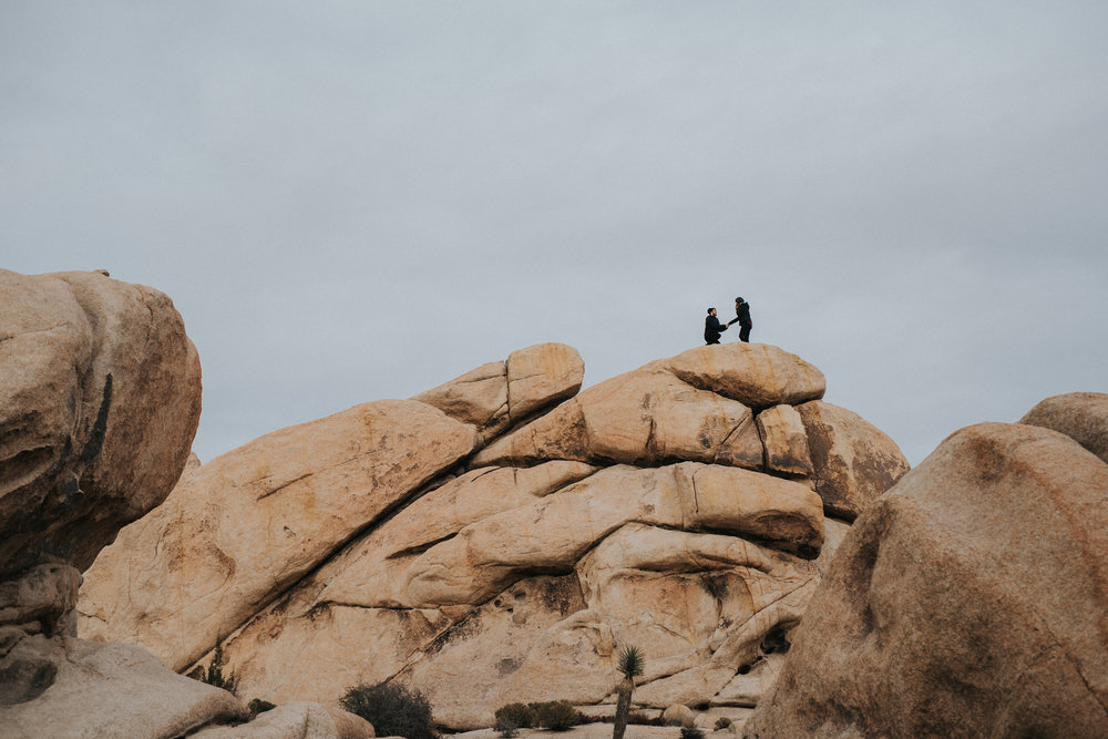 Joshua Tree Proposal