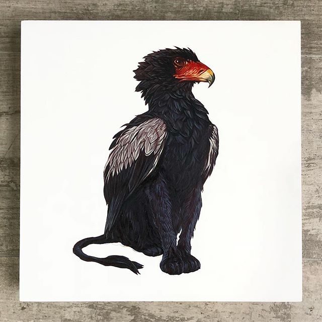 "BLACK BATELEUR GRIFFIN | 10 IN. X 10 IN. X 1.25 IN., Oil and Aerosol on Wood Panel. 🦅🐅 . . . Here are some process pics of my portion before she flew to @sandiego_ca to catch up with Monty for some color and geometric goodness. The final piece will be featured @labodegagallery for their 6th Annual ""PERFECT 10"" show. Saturday, September 22.  5pm - 10pm  Free and all ages. The exhibition will run from September 22nd to October 1st. . . . @tony_philippou @montymontgomery @labodegagallery @gamblincolors . . . #tonyphilippou #montymontgomery #kaleidoskull #labodegagallery #sandiego #anthropomorphic #black #bateleur #griffin #fantasy #design #creature #beast #eagle #panther #process #progress #collaboration #mythological #greek"