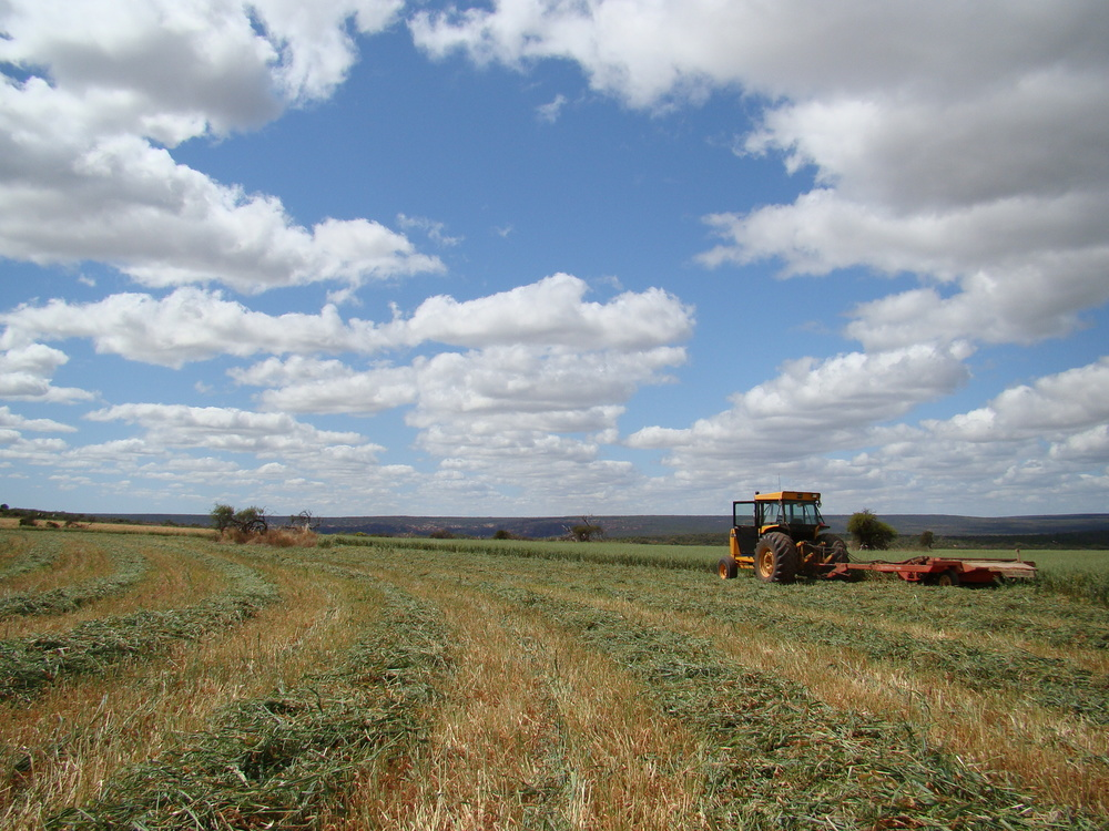 Hay crop at Murchison House Station