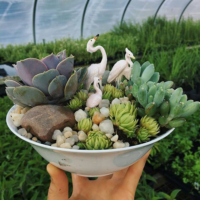 #Repost @pisarcik_flowers with @repostapp ・・・ The Eventbrite for our July 10th workshop at the @neighborhoodflea is now up! Grab your spot as soon as possible! It's going to be a good one, a couple of little birdies told us so... Link in bio! #neighborhoodfleapgh #neighborhoodflea #succulentworkshop #pittsburghflowerfarm #pisarcikflowers