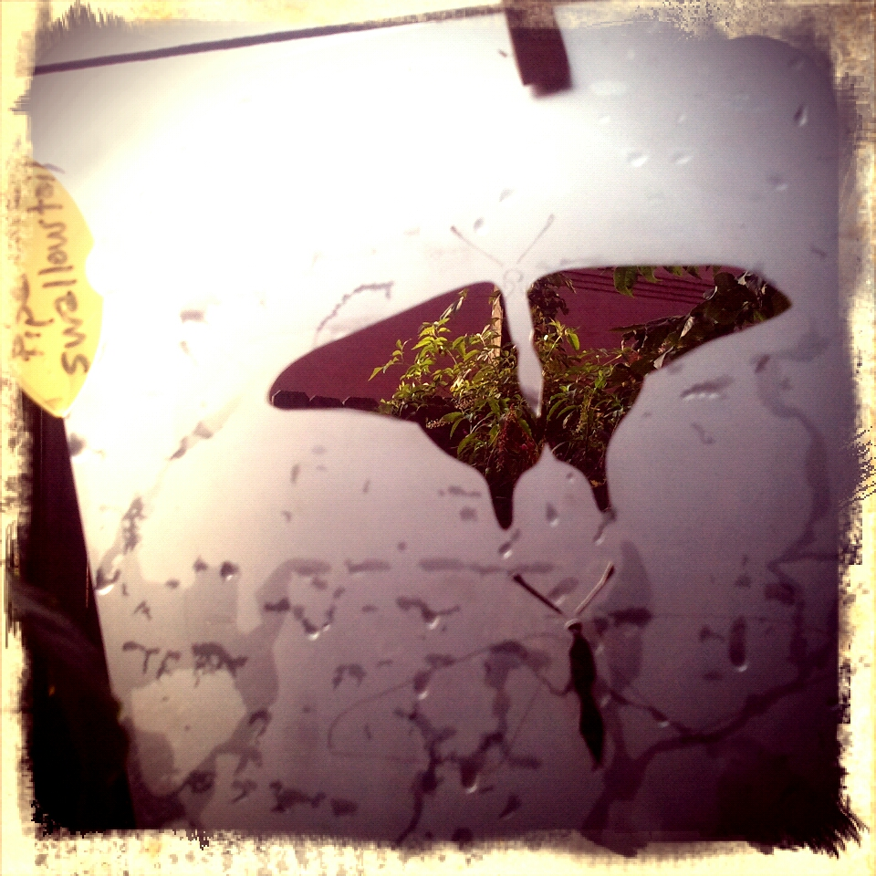 """Pipevine swallowtail flying"" stencil drying in the afternoon sun"