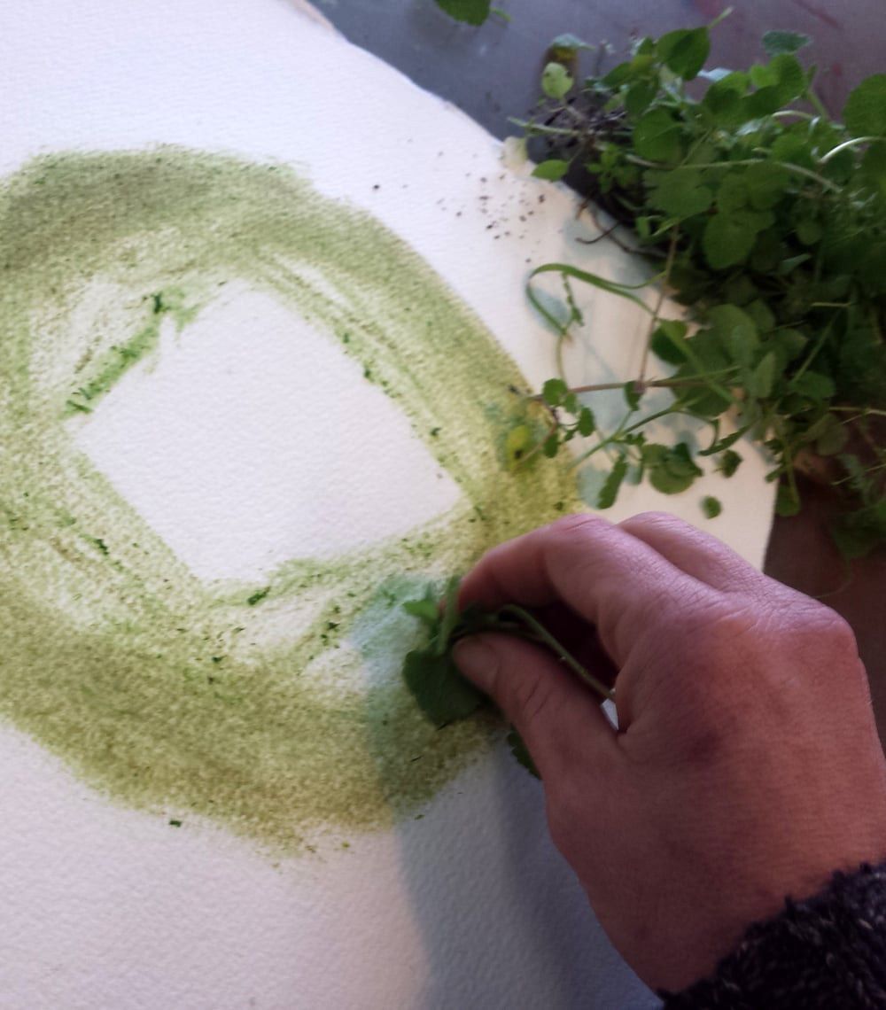 drawing with chickweed