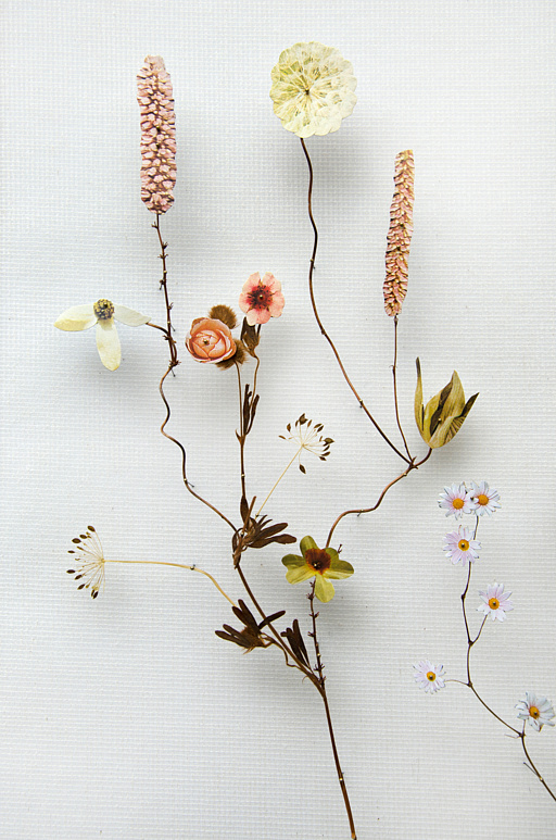 Anna ten Donkelaar, Flower Construction #64 (Detail)