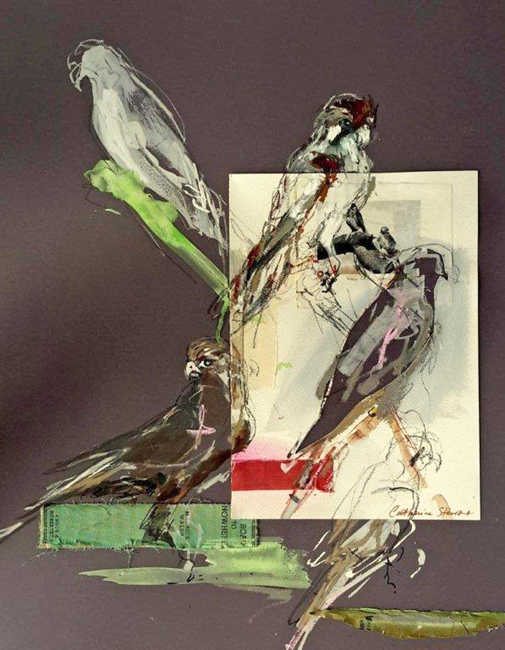 Falcon Study , mixed media on colourfix