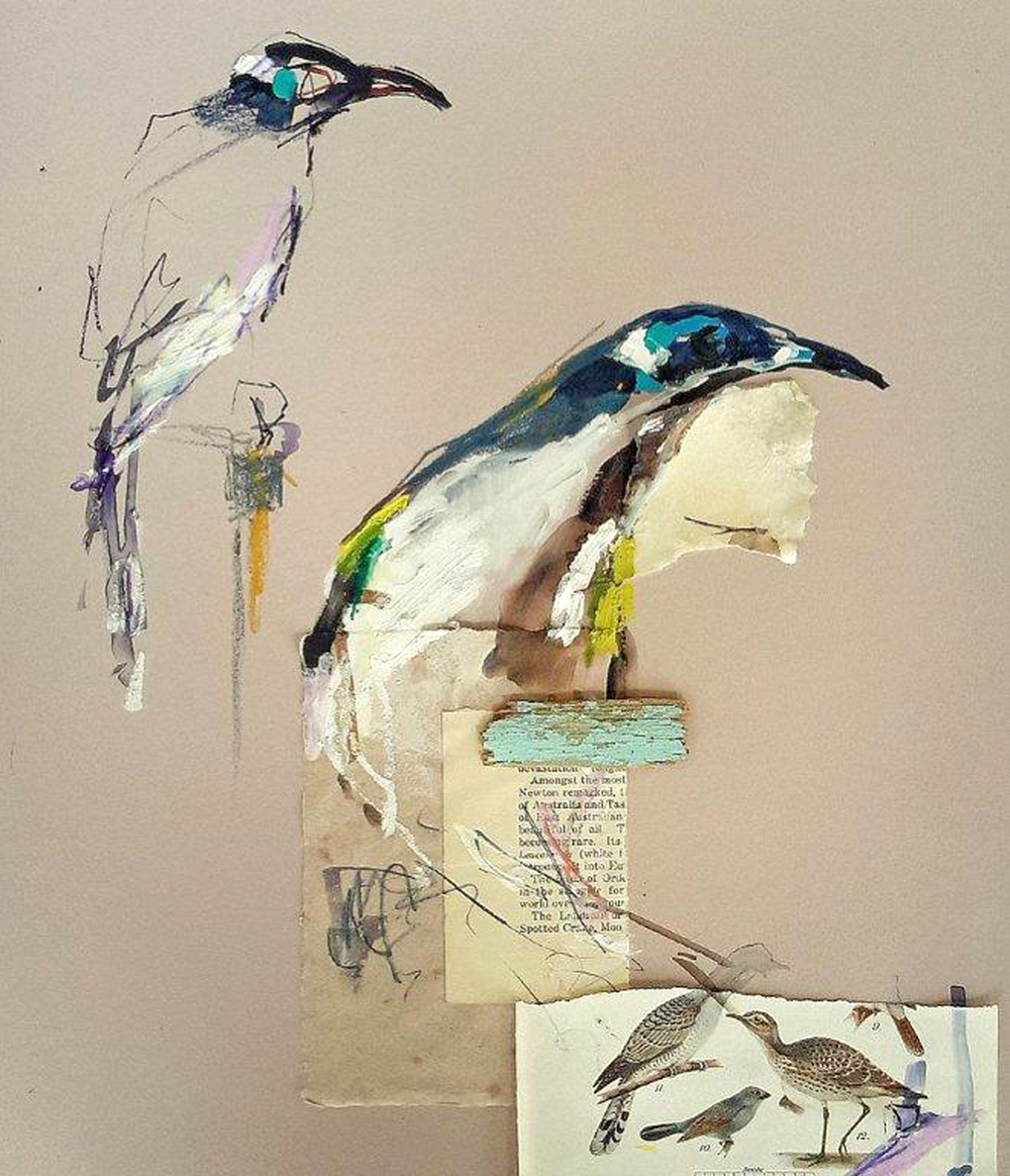 Honeyeater Study, mixed media on colourfix