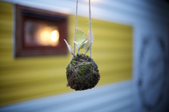 The Corner Store Gallery - Kokedama Workshop with Megan Claire