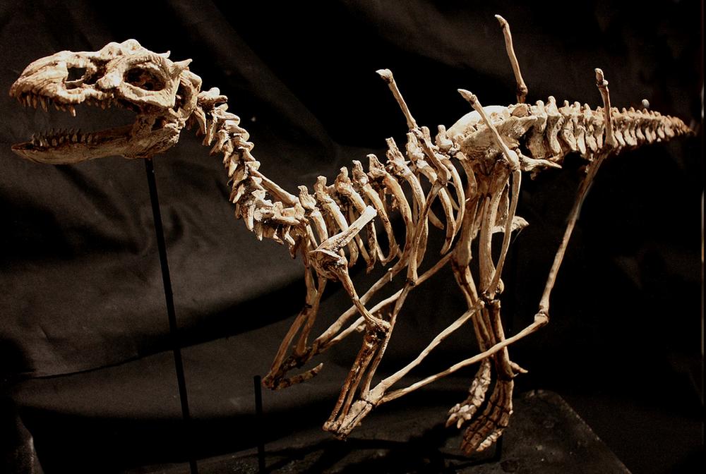 ШОК! Тела странных существ найдены в подвале особняка
