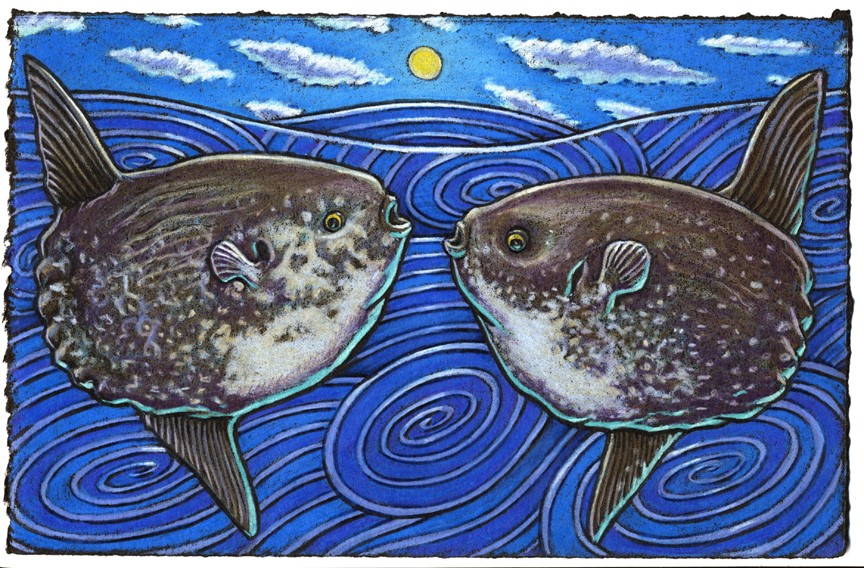 Consider the strange Mola Mola Not many fish look much bolda' For the tail and the head Can be easily misread So remember what I've told ya!