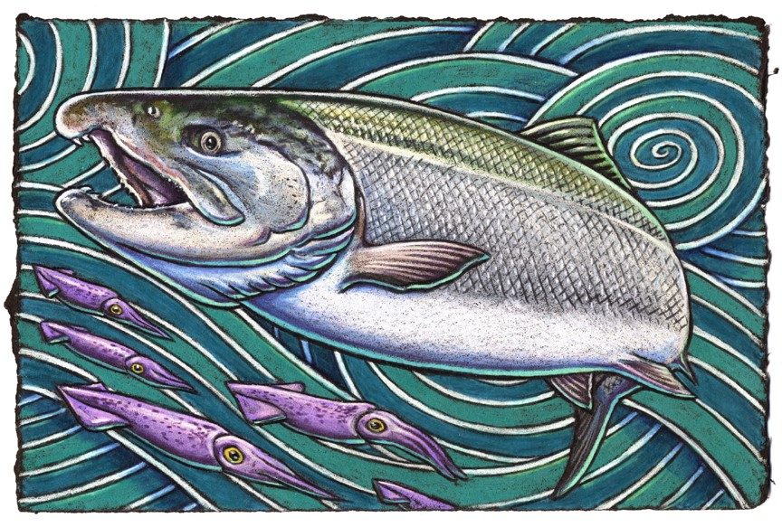 "When anglers hook a wild Coho    They sometimes do cry ""Oh no, oh!""    For it puts up a fight    With all of its might    And leaps like it's at a wild go-go."