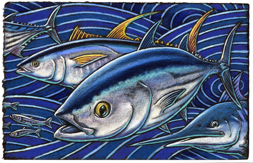 Skipjack and Yellowfin tuna    Just might cross the finish line sooner    If a Marlin they race    They soon might outpace    Even the fastest of fast racing schooners.
