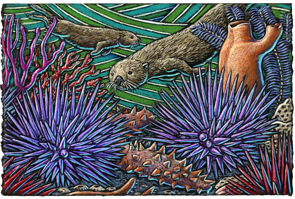 Sea otters are always searchin' For the prickly purple sea urchin Then they lay on their backs And eat 'em like snacks While in the waves they're a' lurchin'.