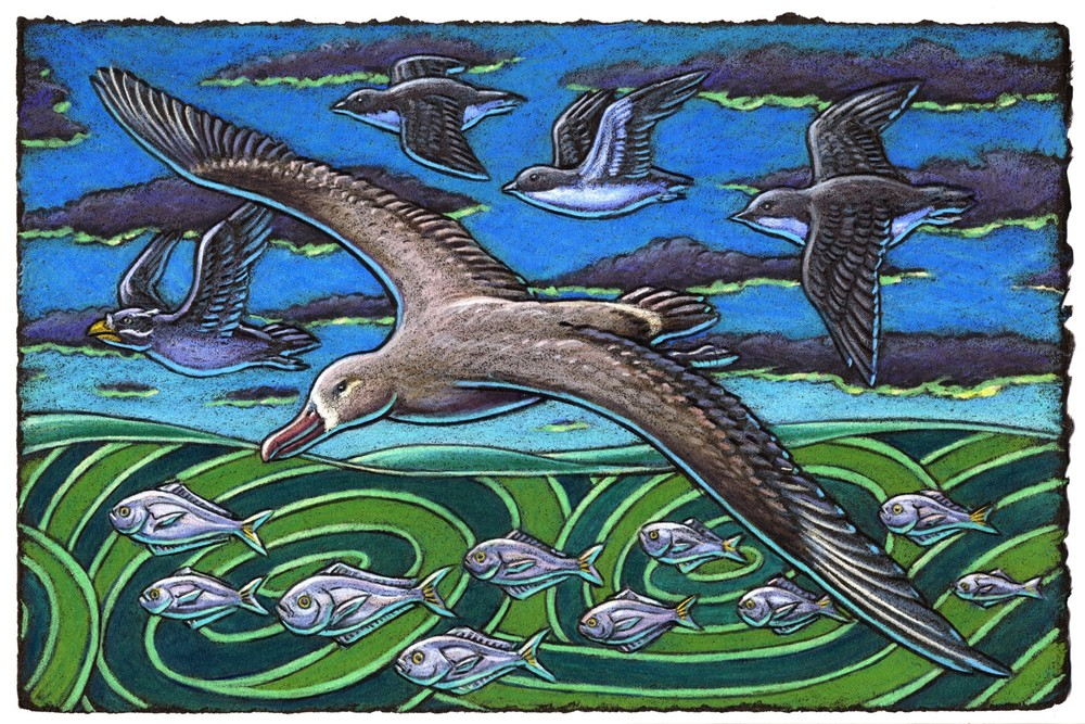 The Black-footed Albatross flies with the greatest of ease When riding upon a smooth ocean breeze And while Murrelets fly fast And the Auklets do dash When out exploring the green rolling seas.