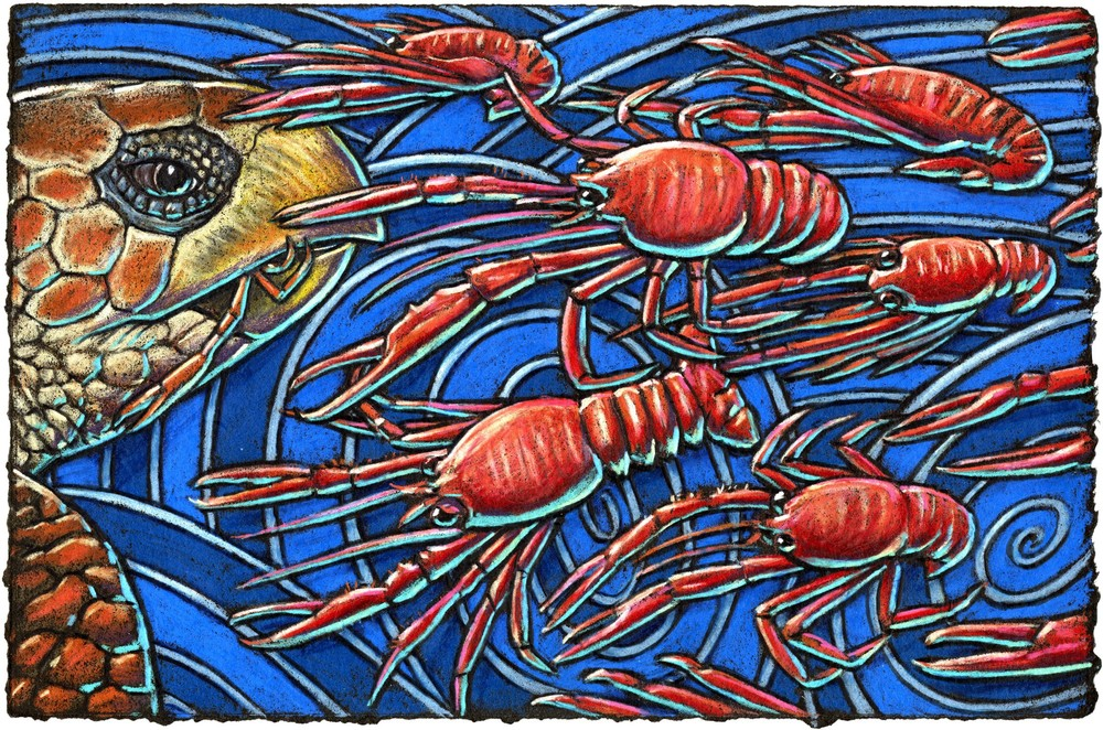The red crab's a crustacean pelagic    Their travel to sea is quite magic    But they don't think it's fine    When big turtles dine    On their kind, it seems sort of tragic.