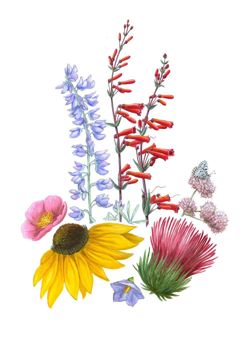 2016 Wildflower Show - Workshop: Drawing Wildflowers (with Erin ...